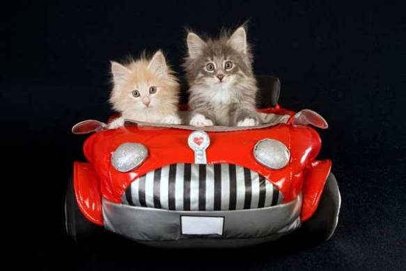 kittens-in-car